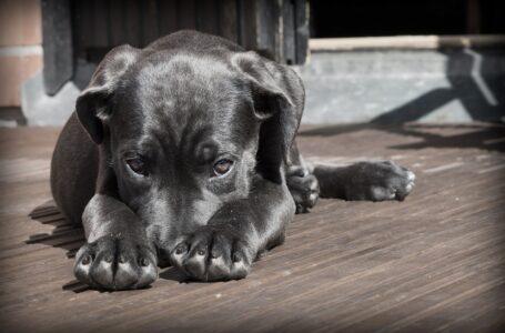 Akademie psího online vzdělávání